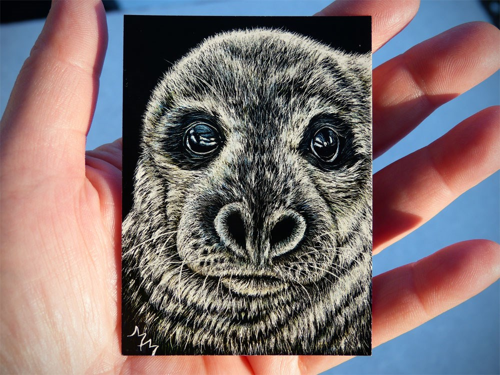 """Seal Pup"" original fine art by Monique Morin Matson"