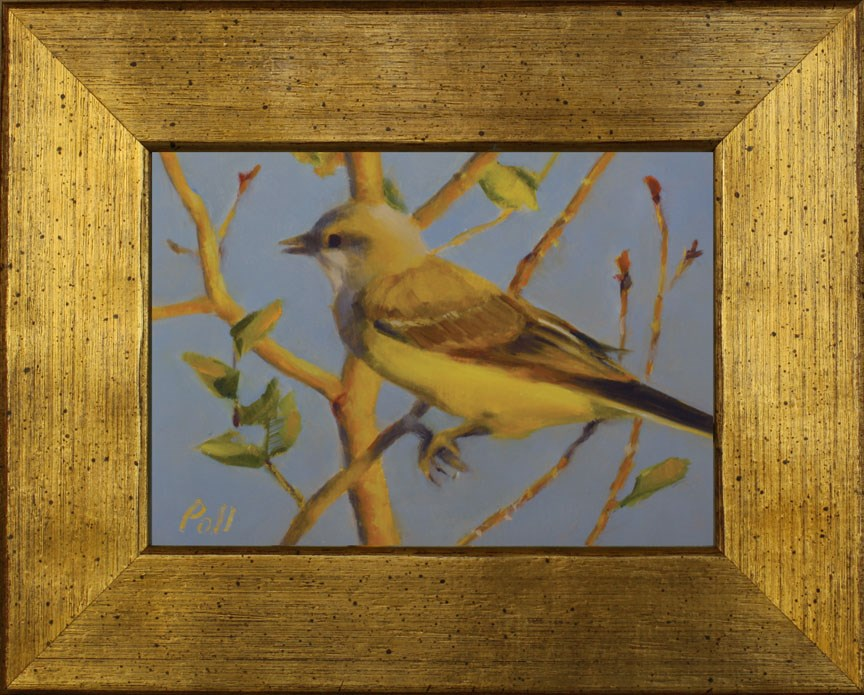 """Kingbird in Aspen (framed)"" original fine art by Pamela Poll"