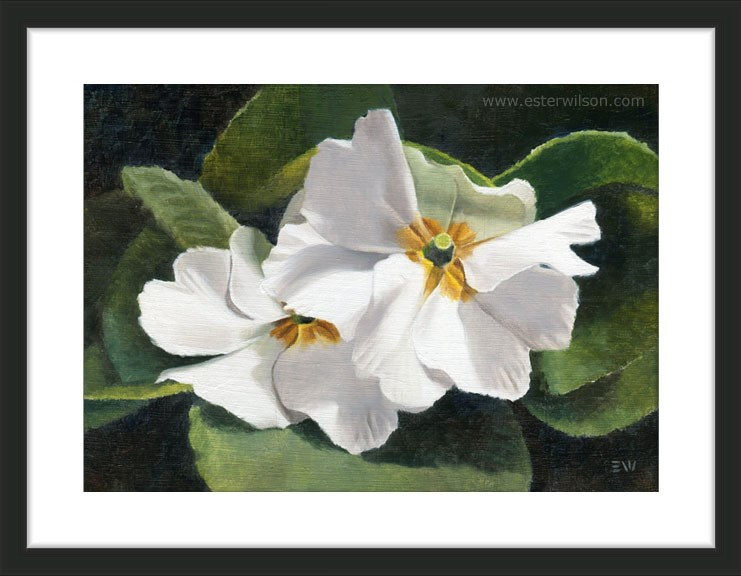 """White Primrose"" original fine art by Ester Wilson"