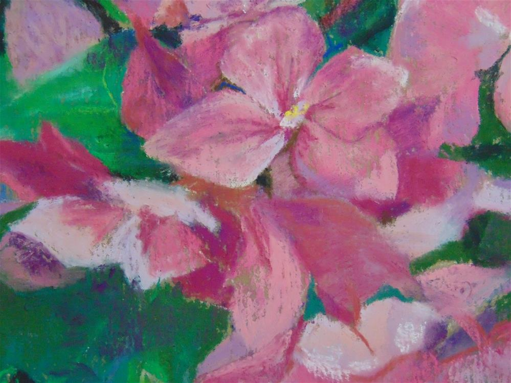 """Pink Hydrangeas"" original fine art by Catherine Kauffman"