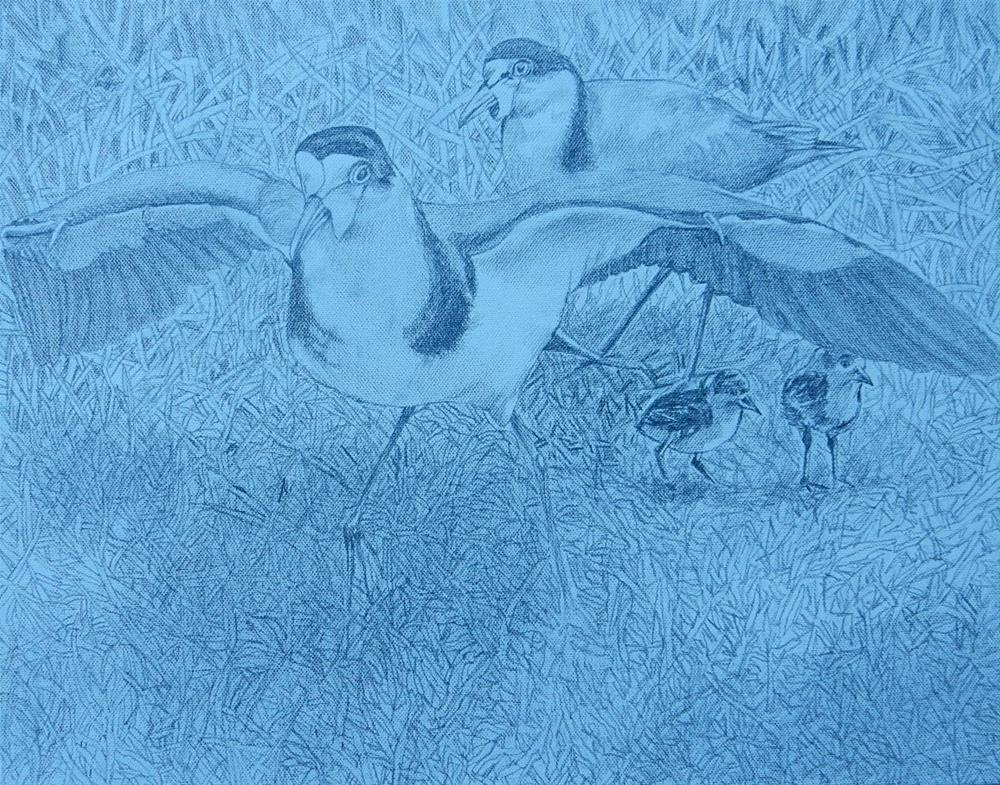 """289 SPUR-WINGED PLOVERS"" original fine art by Trevor Downes"