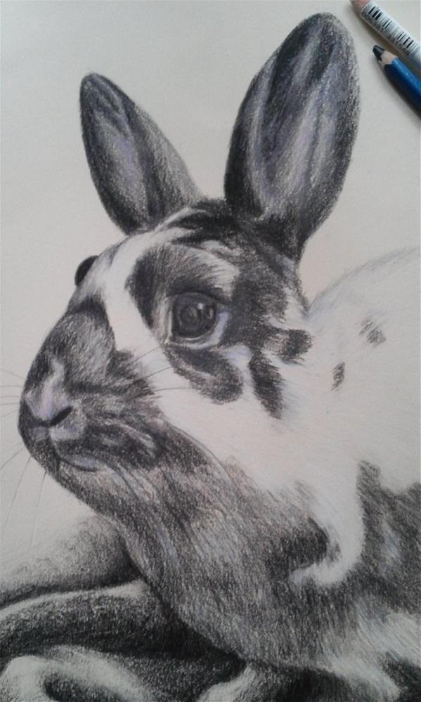 """Bunny Rabbit Pencil Drawing"" original fine art by Camille Morgan"