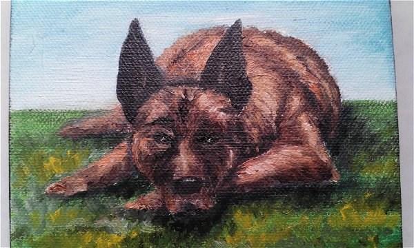 """Malinois Dog"" original fine art by Camille Morgan"