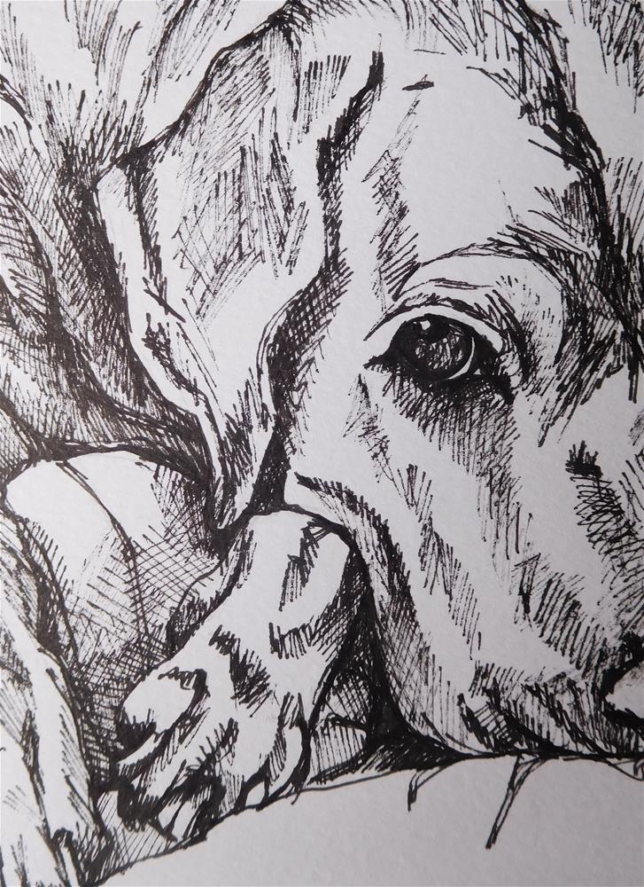 """Dog Sketch 12"" original fine art by Daryl West"