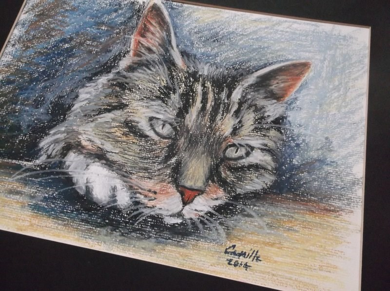 """Manx Cat Matted Oil Pastel Drawing"" original fine art by Camille Morgan"