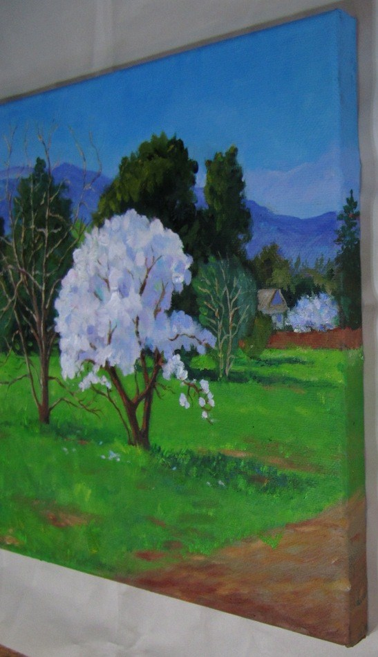 """Almond Trees in Bloom"" original fine art by Patricia Musgrave"