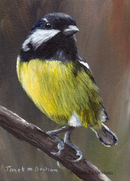 """Yellow Bellied Tit ACEO"" original fine art by Janet Graham"