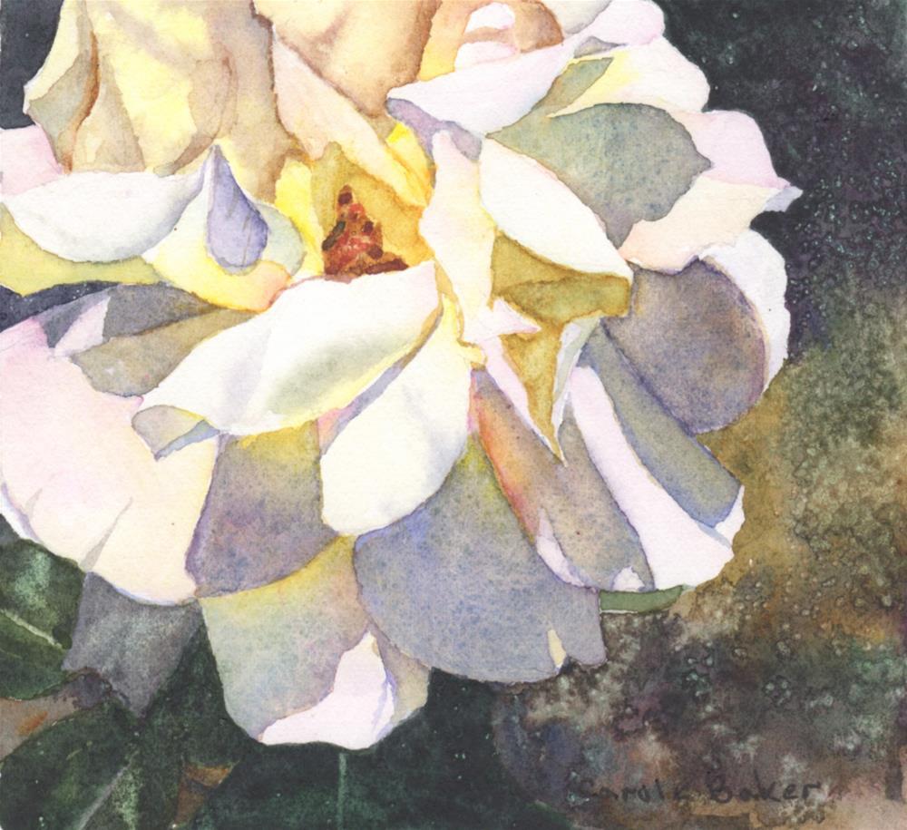 """""""Rose, Again"""" original fine art by Carole Baker"""