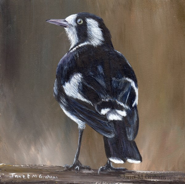 """Magpie Lark"" original fine art by Janet Graham"