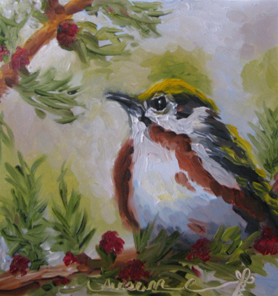 """Chestnut-sided Warbler"" original fine art by Susan Elizabeth Jones"
