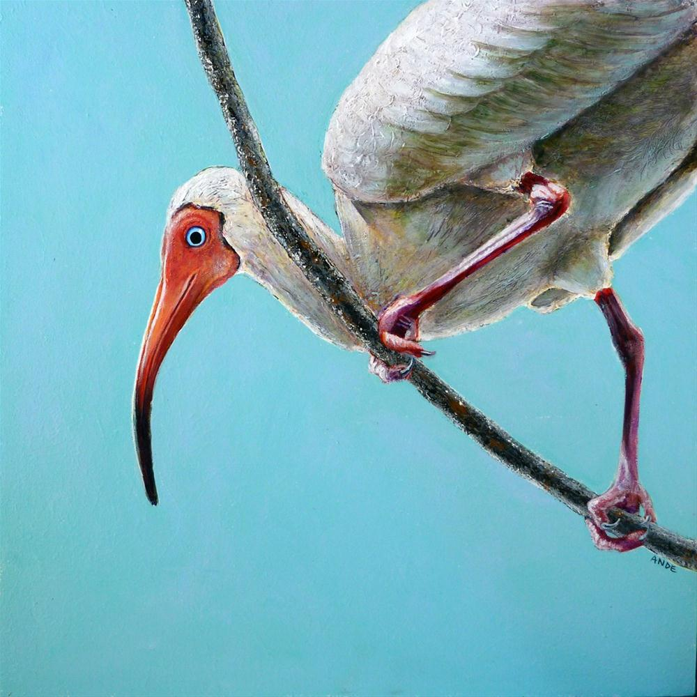 """White Ibis"" original fine art by Ande Hall"