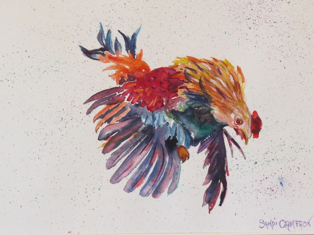 """Angry Rooster"" original fine art by Sandra Cameron"