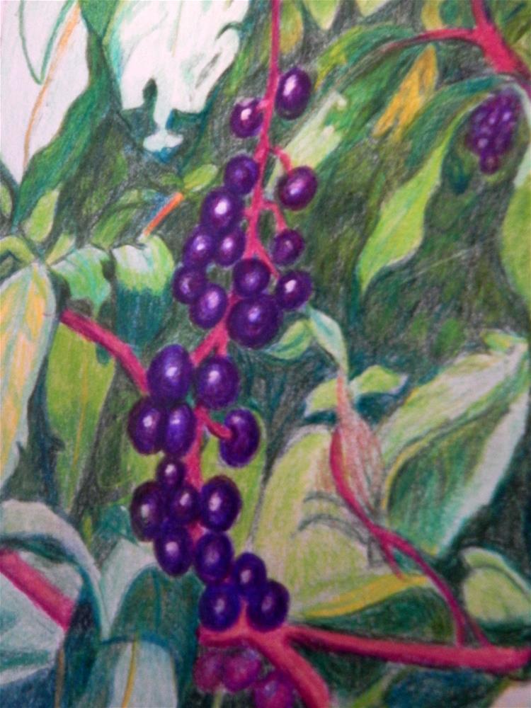 """Sumac Berries"" original fine art by Elaine Shortall"