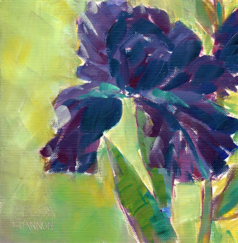 """""""Iris"""" original fine art by Melissa Gannon"""