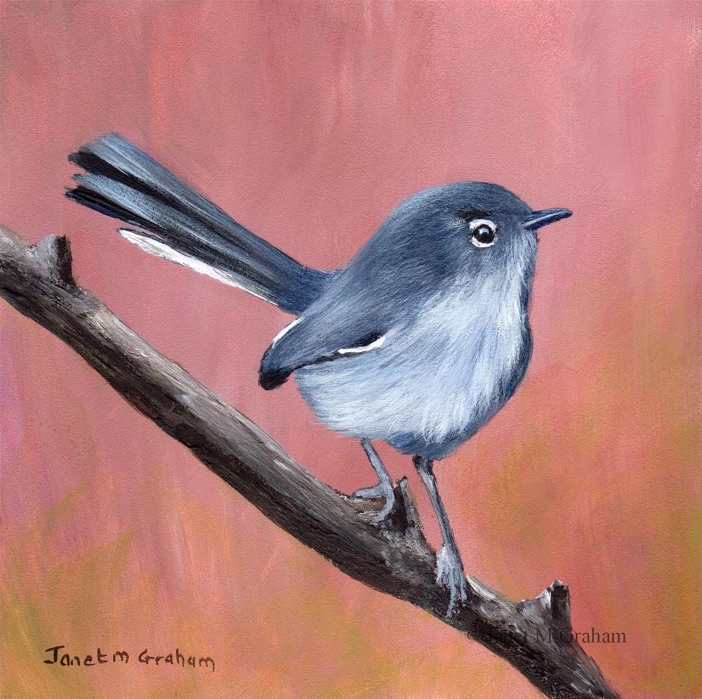 """Black Tailed Gnatcatcher"" original fine art by Janet Graham"