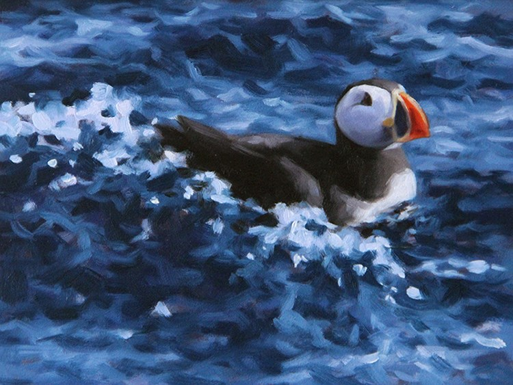"""Atlantic Puffin III"" original fine art by Sarah Becktel"
