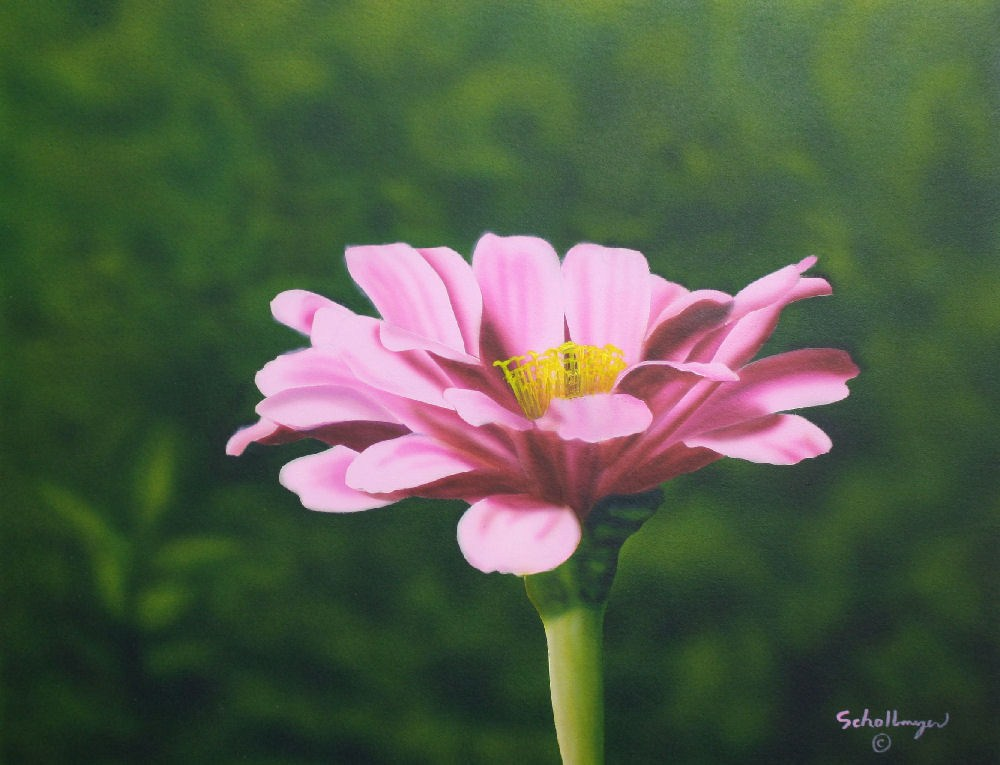 Zinnia Beauty original fine art by Fred Schollmeyer