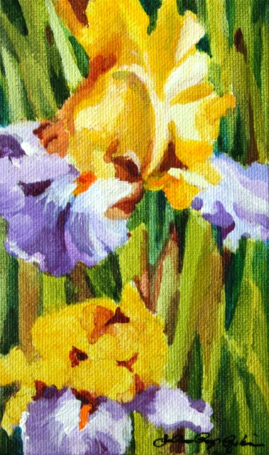"""Bearded with Yellows and lavender"" original fine art by JoAnne Perez Robinson"