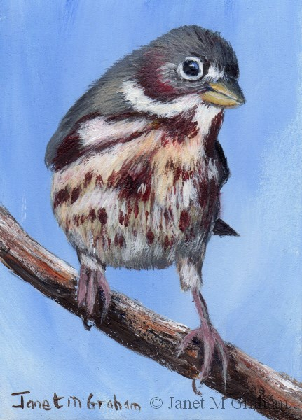 """Fox Sparrow ACEO"" original fine art by Janet Graham"