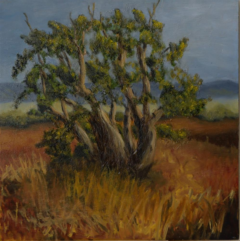 """Old Cedar Tree"" original fine art by Michelle Wolfe"