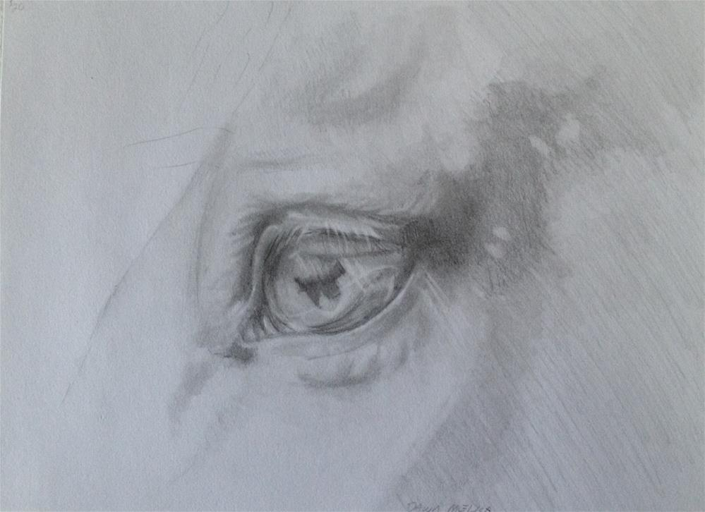 """Study of Horse Eye"" original fine art by Dawn Melka"