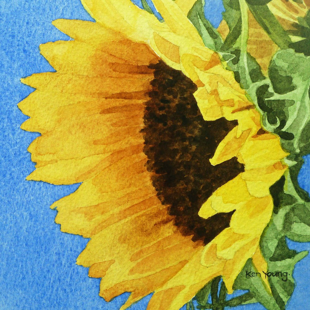 """Sunflower Season"" original fine art by Ken Young"