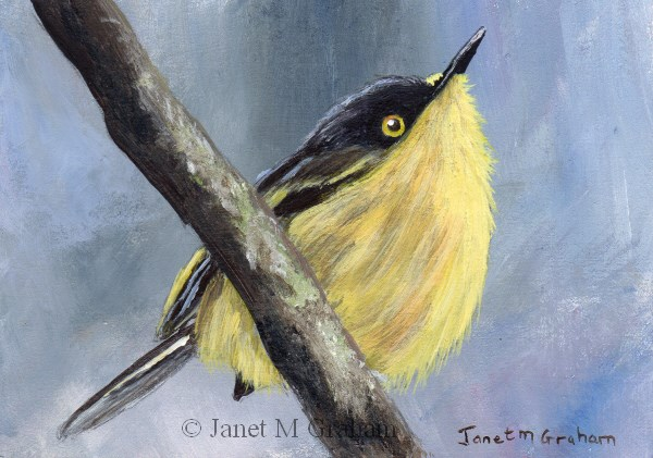 """Common Tody Flycatcher ACEO"" original fine art by Janet Graham"