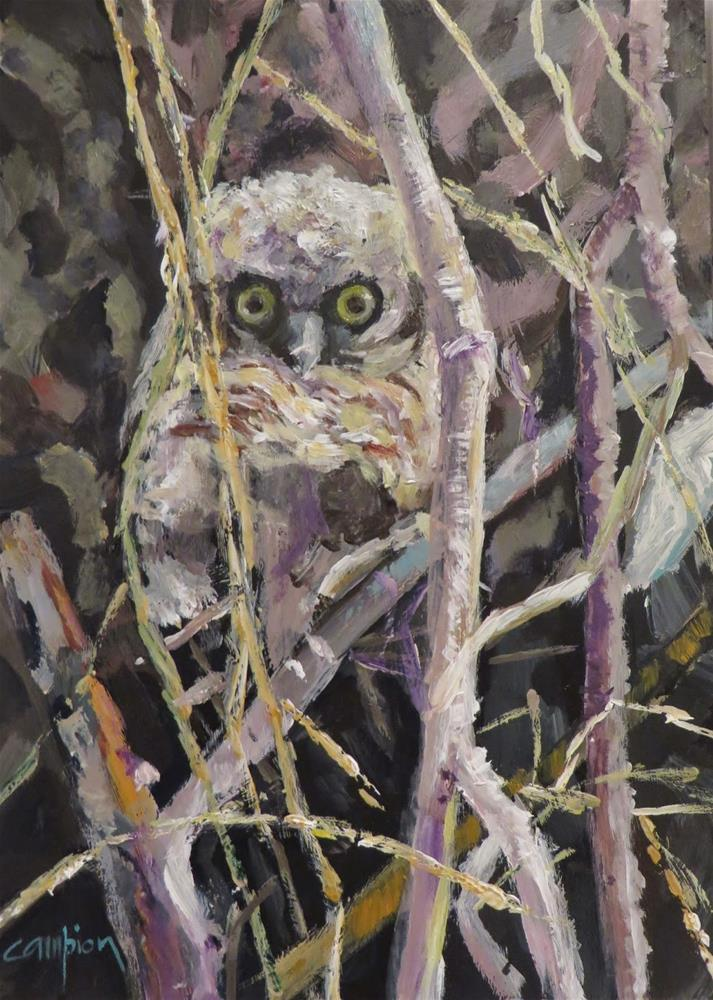 """593 Great Horned Owlet"" original fine art by Diane Campion"