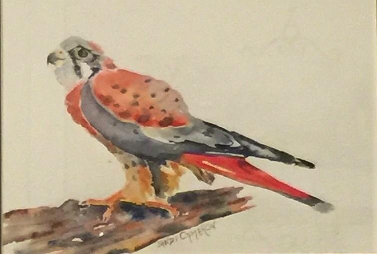 """American Kestrel Hawk"" original fine art by Sandra Cameron"