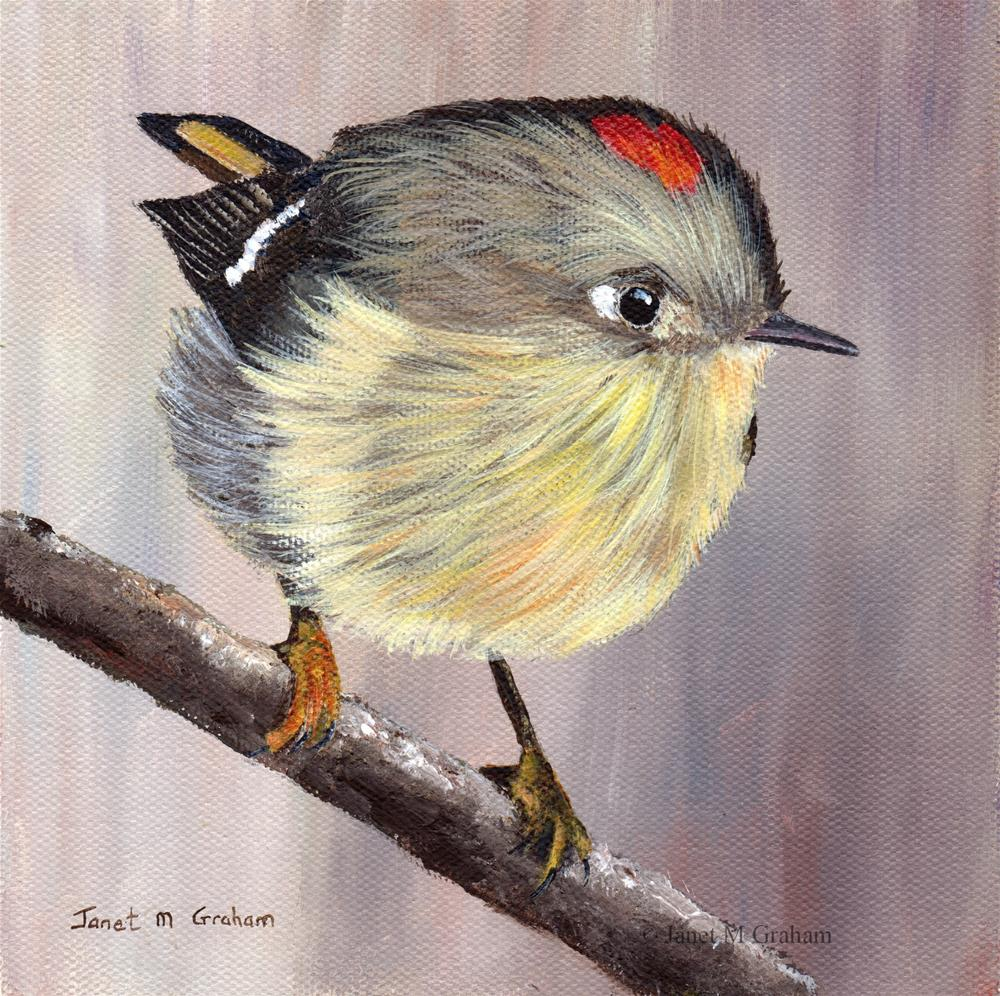 """Ruby Crowned Kinglet"" original fine art by Janet Graham"