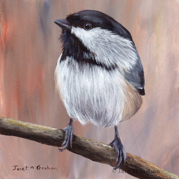 """Black Capped Chickadee No 3"" original fine art by Janet Graham"