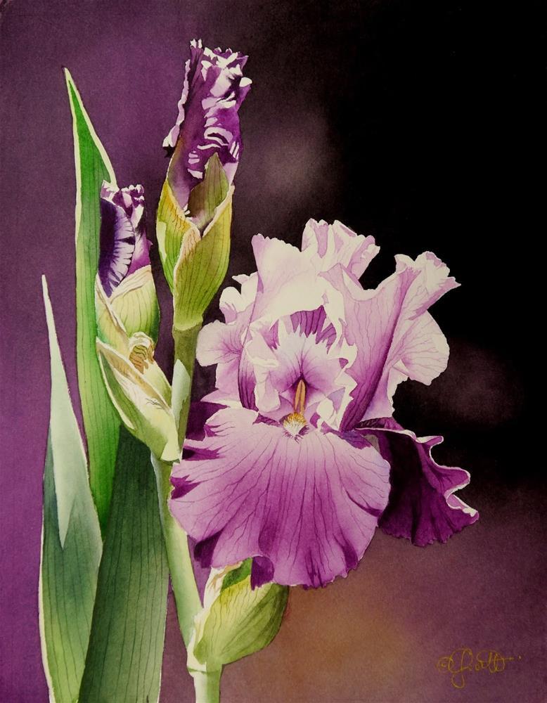 """""""Lavender Iris"""" original fine art by Jacqueline Gnott, whs"""
