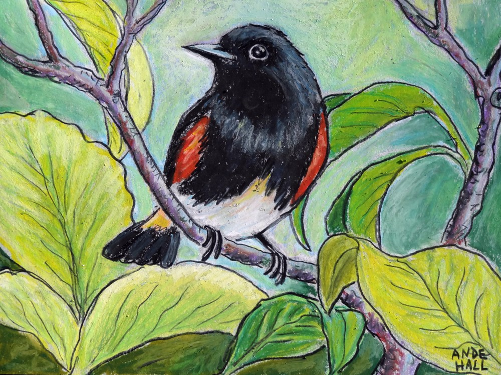 """American Redstart"" original fine art by Ande Hall"