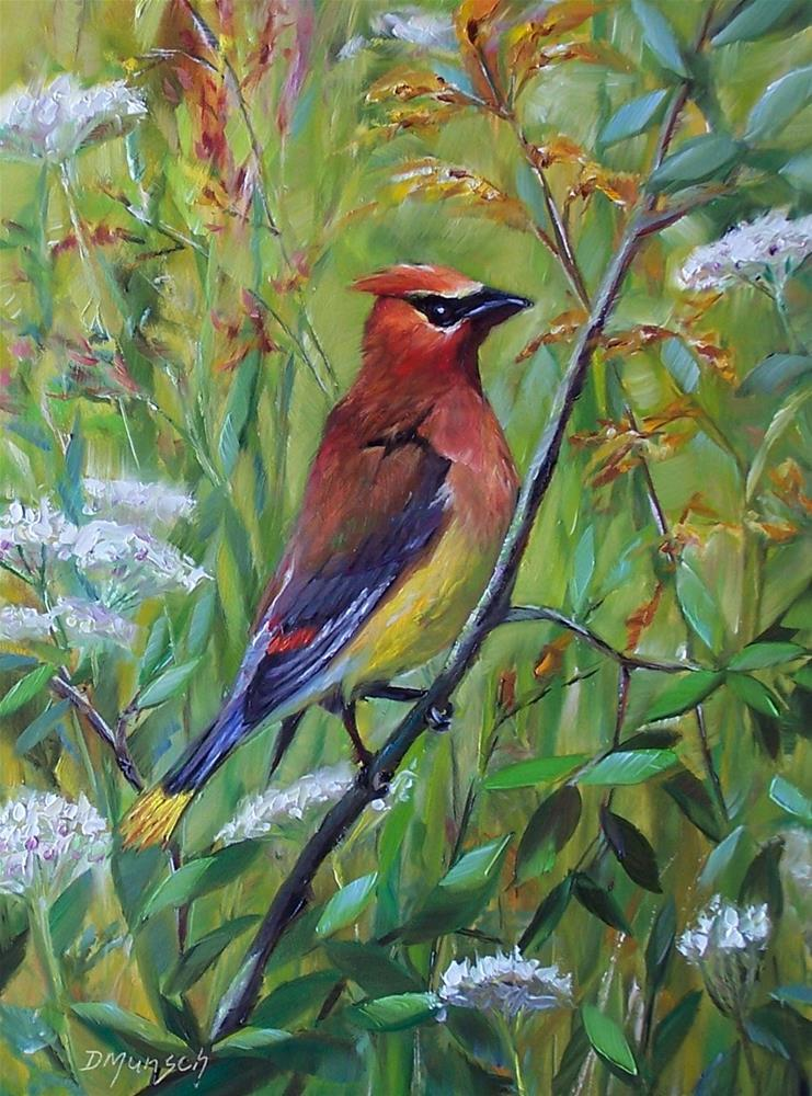 """Cedar Waxwing"" original fine art by Donna Munsch"