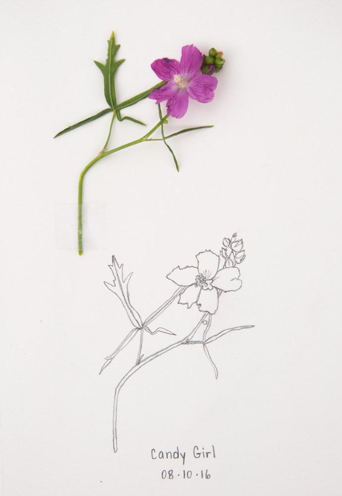 """Daily Sketch: Candy Girl"" original fine art by Debbie Lamey-Macdonald"