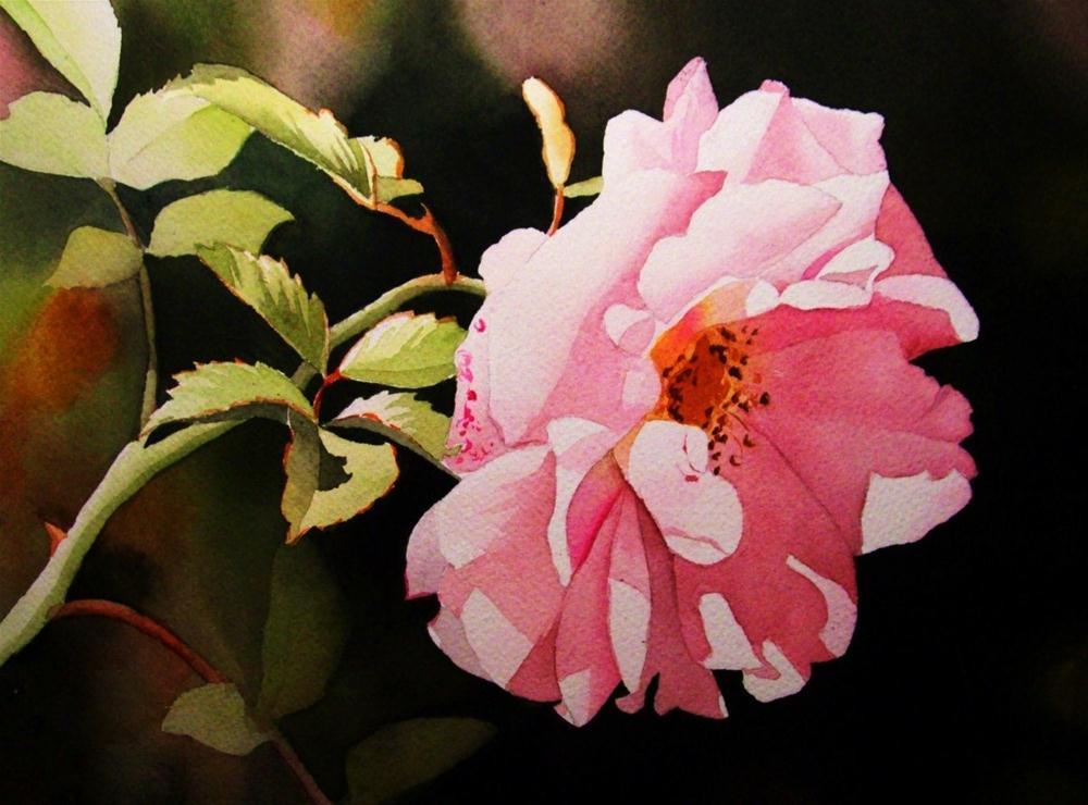 """Soft Morning Sun"" original fine art by Jacqueline Gnott, whs"