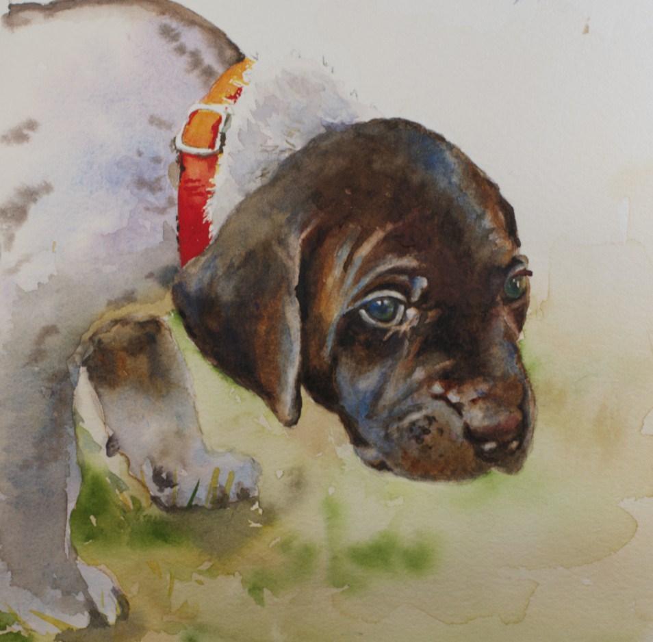 """Curious Puppy"" original fine art by Sue Churchgrant"