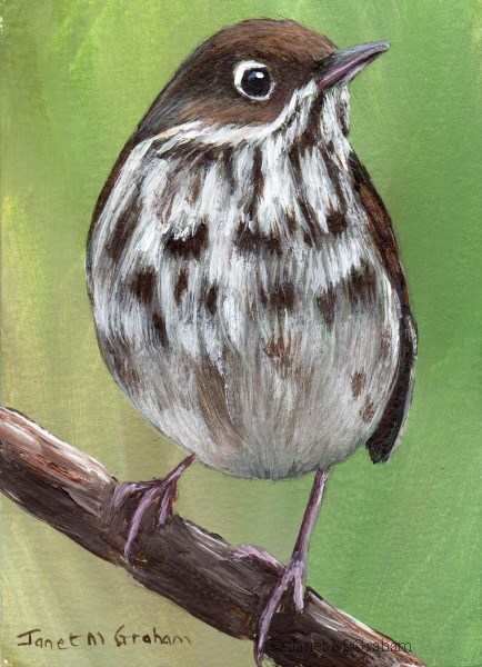 """Hermit Thrush ACEO"" original fine art by Janet Graham"