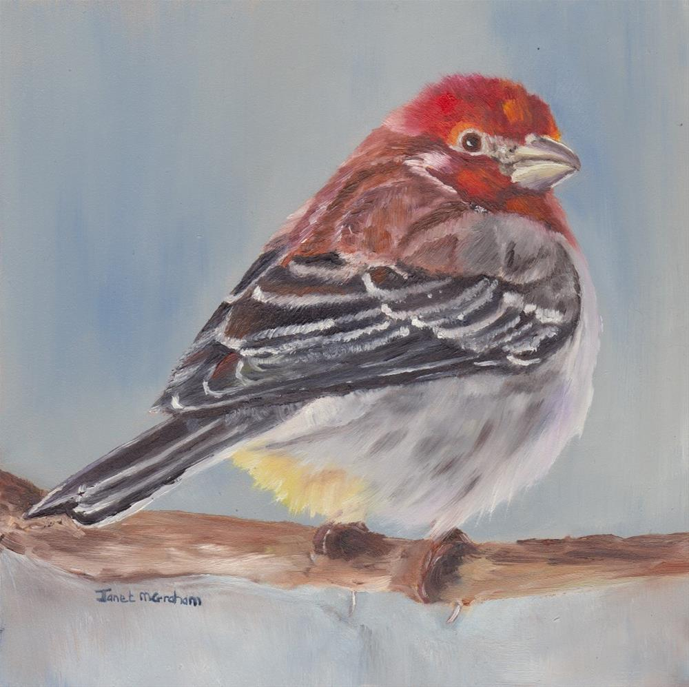 """House Finch"" original fine art by Janet Graham"