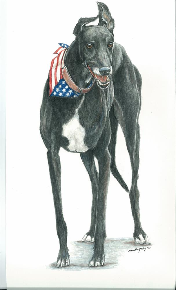 """patriotic greyhound"" original fine art by Charlotte Yealey"