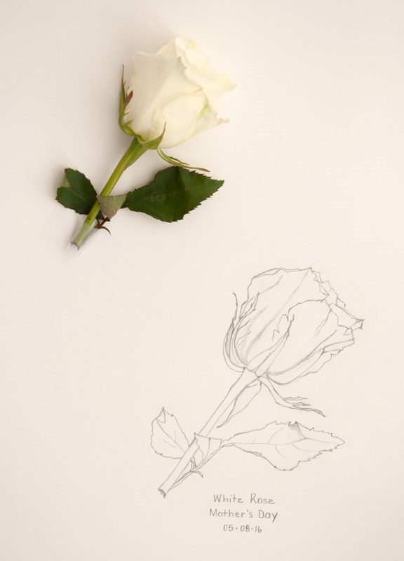 """Daily Sketch: White Rose"" original fine art by Debbie Lamey-Macdonald"