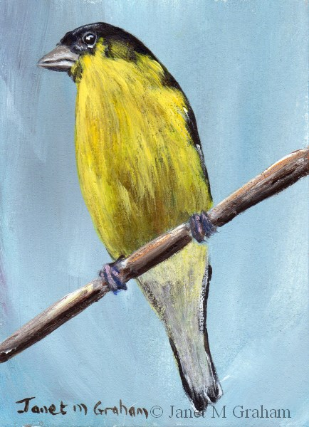 """Lesser Goldfinch ACEO"" original fine art by Janet Graham"