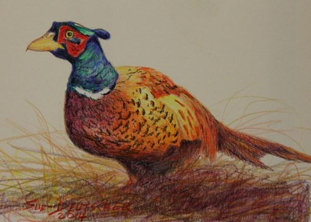 """""""Pheasant"""" original fine art by Sue Deutscher"""