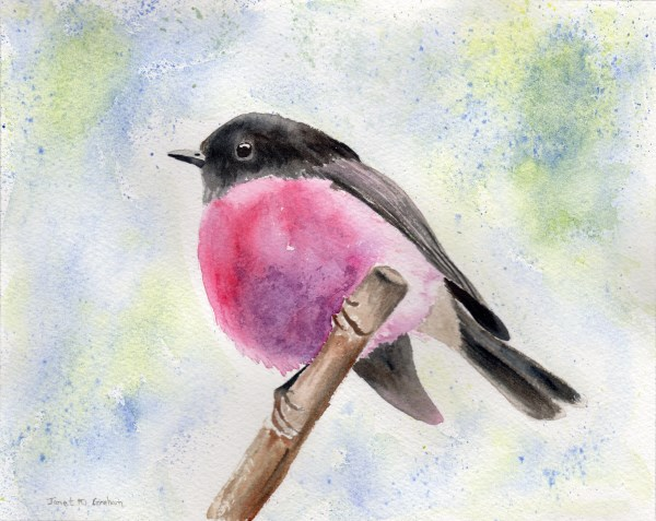 """Pink Robin"" original fine art by Janet Graham"