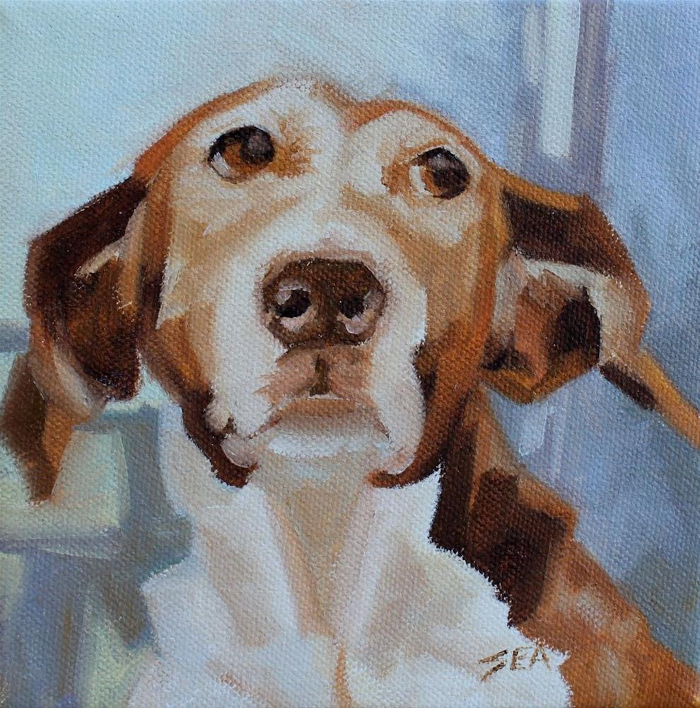 """''What?#''"" original fine art by Susan Ashmore"