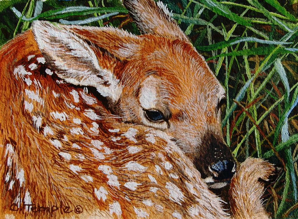 """Whitetail Fawn"" original fine art by Catherine Temple"