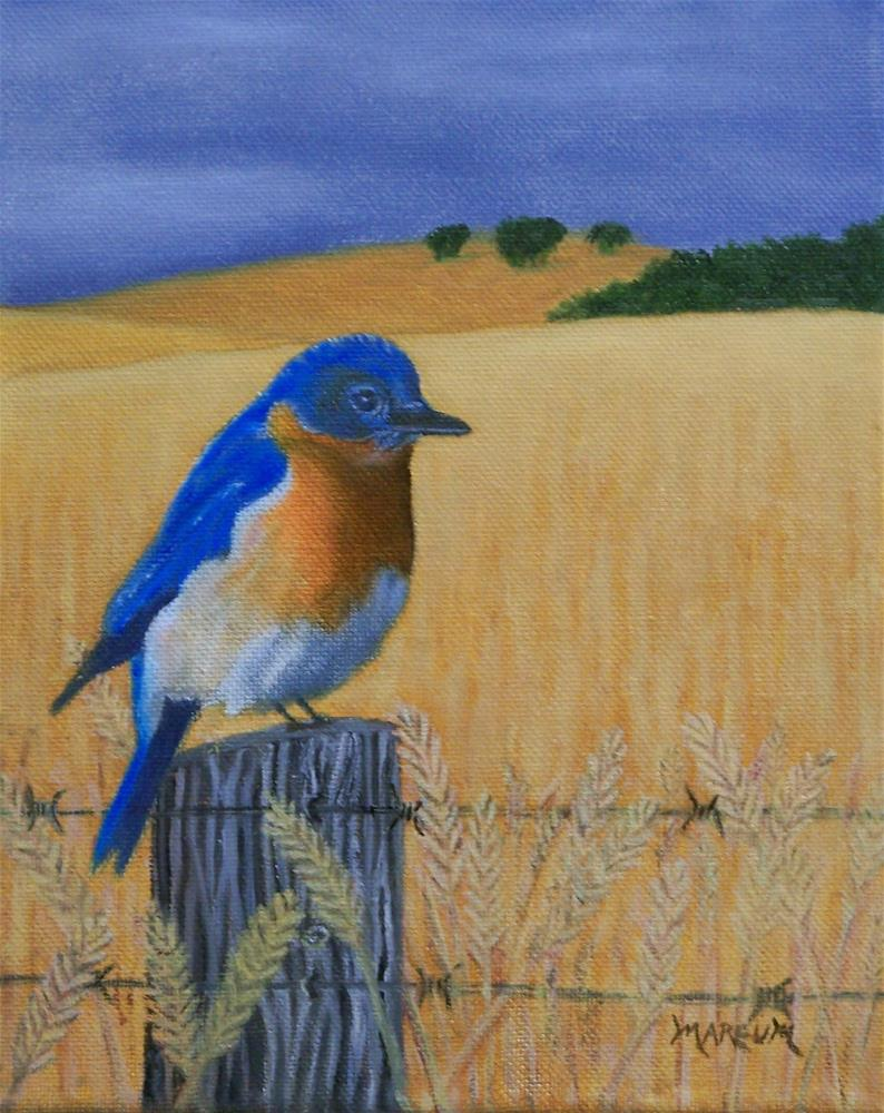 """Bluebird on a Fence"" original fine art by John Marcum"