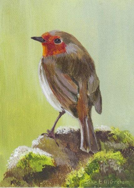 """Robin ACEO"" original fine art by Janet Graham"
