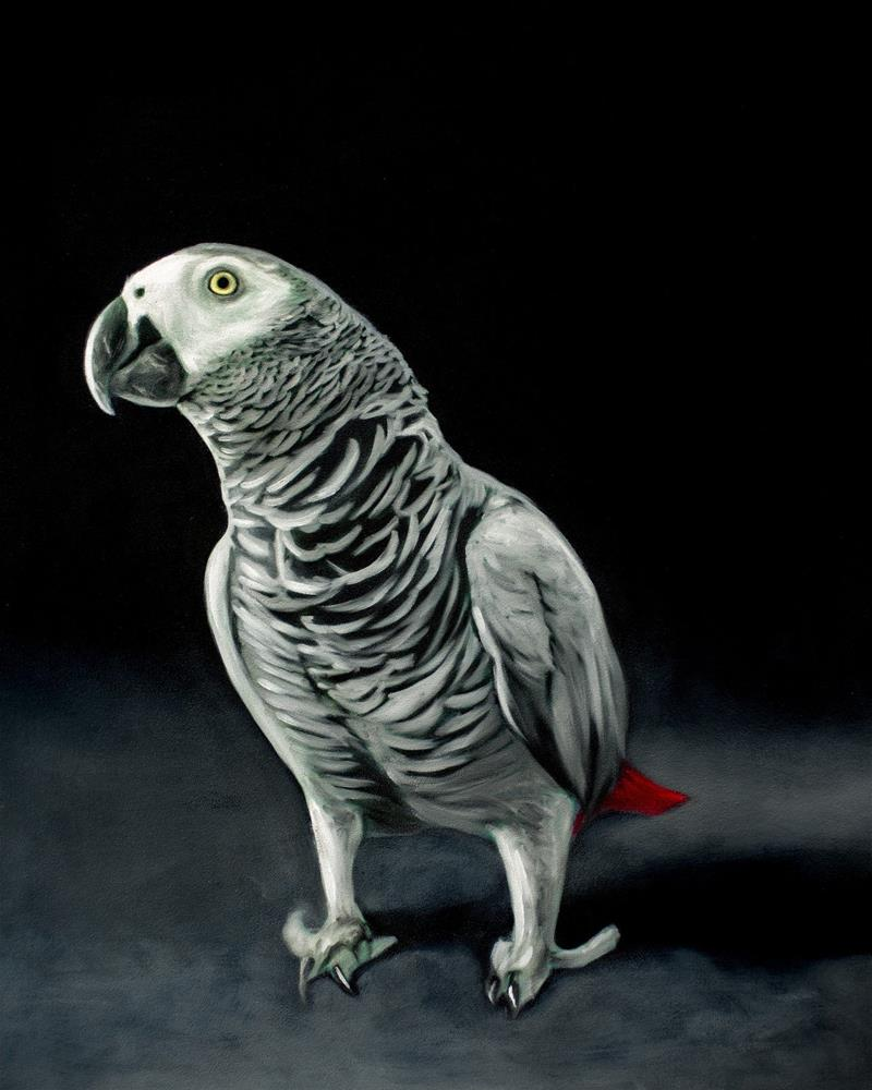 """African Grey Parrot"" original fine art by Lauren Pretorius"