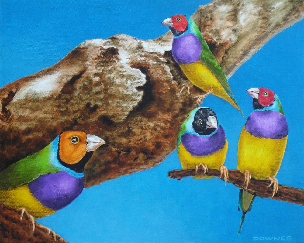 """291 GOULDIAN FINCHES"" original fine art by Trevor Downes"